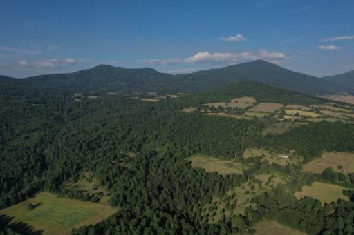 Pine trees are once again covering large swathes of Cheran in Mexico's Michoacan state