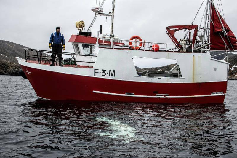 "Norwegian fisherman observes a beluga whale swimming below his boat before the Norwegian fishermen were able to removed the tight harness, off the northern Norwegian coast Friday, April 26, 2019. The harness strap which features a mount for an action camera, says ""Equipment St. Petersburg"" which has prompted speculation that the animal may have escaped from a Russian military facility. (Joergen Ree Wiig/Norwegian Direcorate of Fisheries Sea Surveillance Unit via AP)"