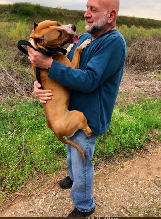 Gale, a prize-winning show dog from the Netherlands, has been reunited with her owner after disappearing at an Atlanta airport and going missing for days. (Hartsfield-Jackson Atlanta International Airport )