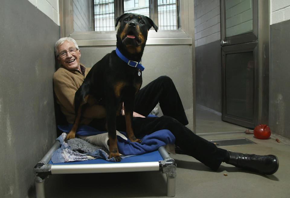 Paul O'Grady with 18-month-old Jenny the timid Rottweiler. (Paul Gray/ITV)