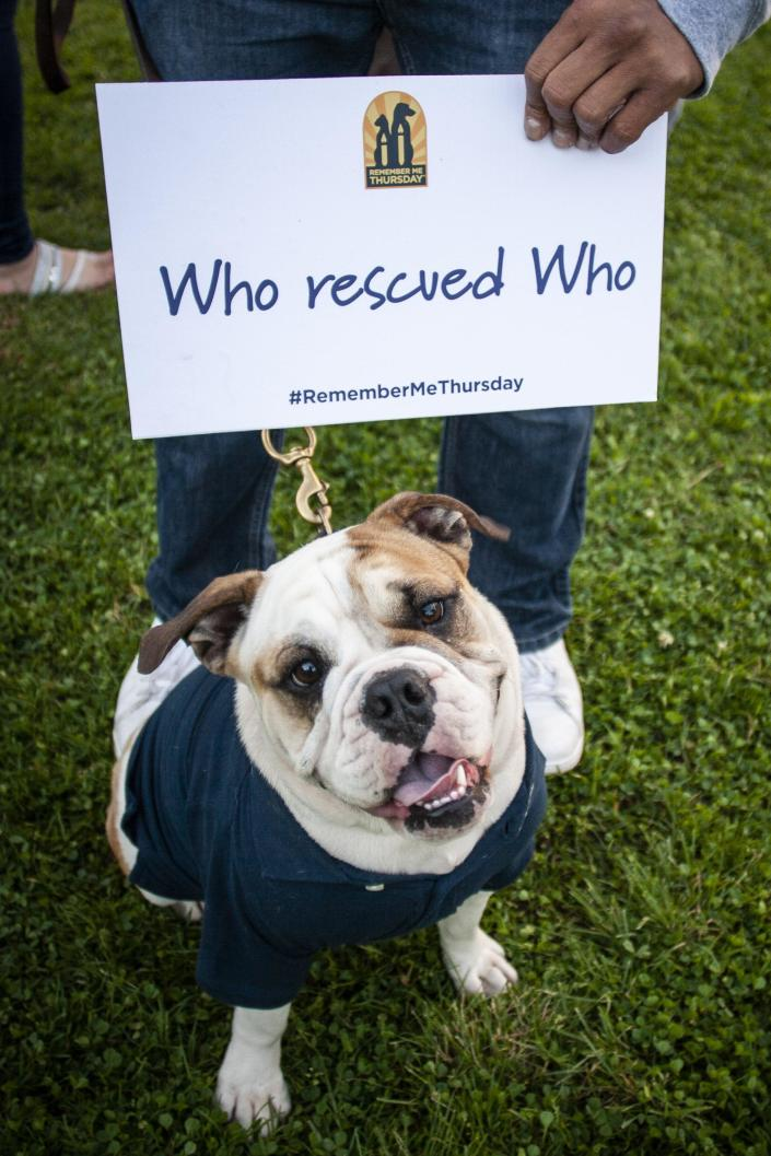 A bulldog smiles at a past Remember Me Thursday celebration. (Courtesy of Helen Woodward Animal Center)