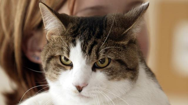 Study Links Cat Litter Box to Increased Suicide Risk