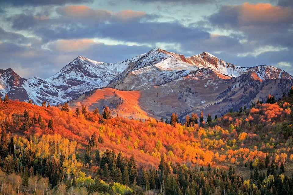 """<p><strong>Where to go:</strong> The Wasatch Mountains are home to canyon maple, quaking aspen, scrub oak, Douglas hawthorn, serviceberries, and evergreens. Make your way along the Mt. Nebo National Scenic Byway or book reservations for Snowbird's highly attended Oktoberfest. </p><p><strong>When to go:</strong> <a href=""""https://www.visitutah.com/things-to-do/fall-foliage/"""" rel=""""nofollow noopener"""" target=""""_blank"""" data-ylk=""""slk:Early October"""" class=""""link rapid-noclick-resp"""">Early October </a></p><p><a class=""""link rapid-noclick-resp"""" href=""""https://go.redirectingat.com?id=74968X1596630&url=https%3A%2F%2Fwww.tripadvisor.com%2FHotels-g659486-Wasatch_Range_Utah-Hotels.html&sref=https%3A%2F%2Fwww.redbookmag.com%2Flife%2Fg34045856%2Ffall-colors%2F"""" rel=""""nofollow noopener"""" target=""""_blank"""" data-ylk=""""slk:FIND A HOTEL"""">FIND A HOTEL</a></p>"""