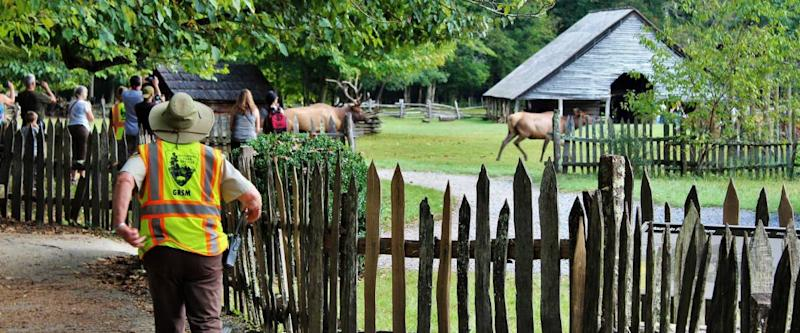 Park ranger moving people away from elks during mating season in Tennessee.