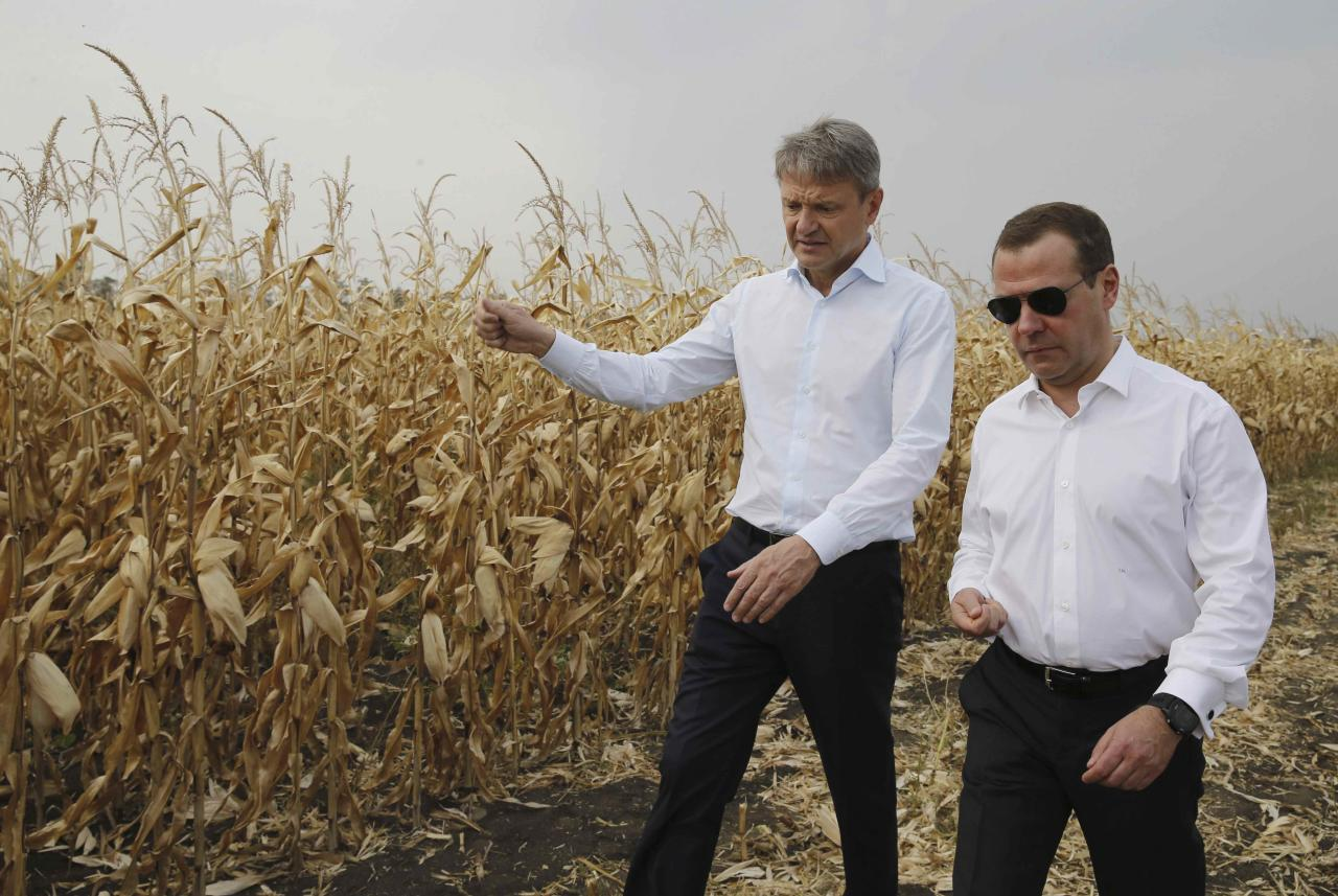 Russian Prime Minister Dmitry Medvedev (R) and Agriculture Minister Alexander Tkachev walk in a field during a visit to the Republic of Adygea, Russia September 22, 2017. Sputnik/Dmitry Astakhov/Pool via REUTERS  ATTENTION EDITORS - THIS IMAGE WAS PROVIDED BY A THIRD PARTY.