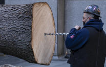 A hole for a large spike is drilled into the trunk of the 2020 Rockefeller Center Christmas tree, a 75-foot tall Norway Spruce that was acquired in Oneonta, N.Y., as its prepared for setting on a platform at Rockefeller Center Saturday, Nov. 14, 2020, in New York. (AP Photo/Craig Ruttle)