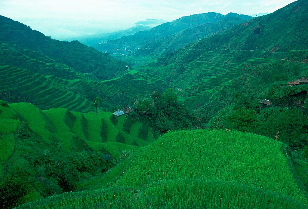 PHILIPPINES:  Rice Terraces at Banaue, Luzon Island, Philippines. This terracing is more than 2,000 years old.