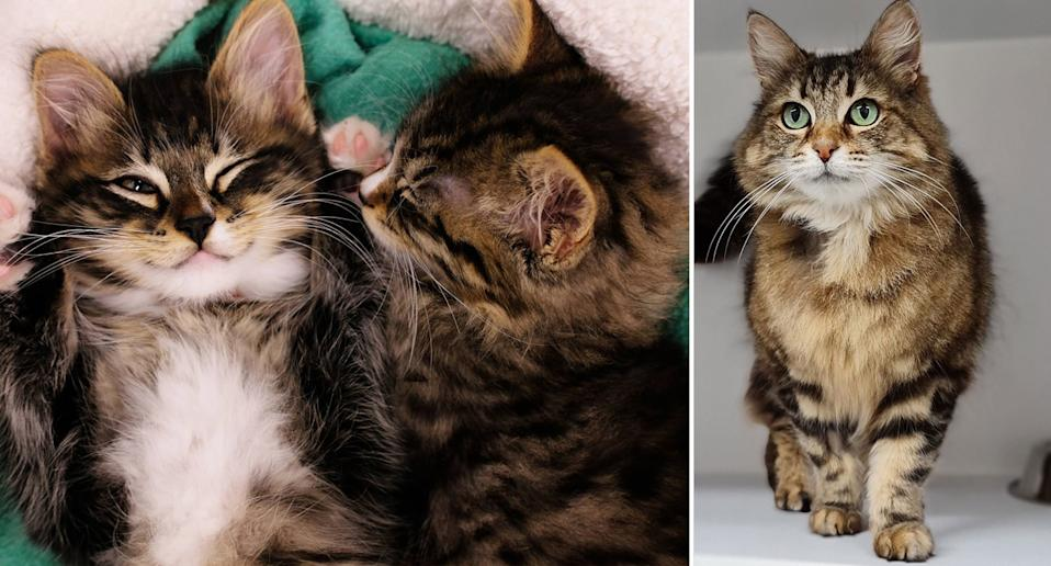 Cats and kittens that need homes at the Lost Dogs Home in Victoria