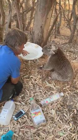 A man offers water emptied into an old sink to a koala in Adelaide, Australia, January 24, 2019, in this picture obtained from social media. Picture taken January 24, 2019. Mandatory Credit MICHELE WHALL /via REUTERS