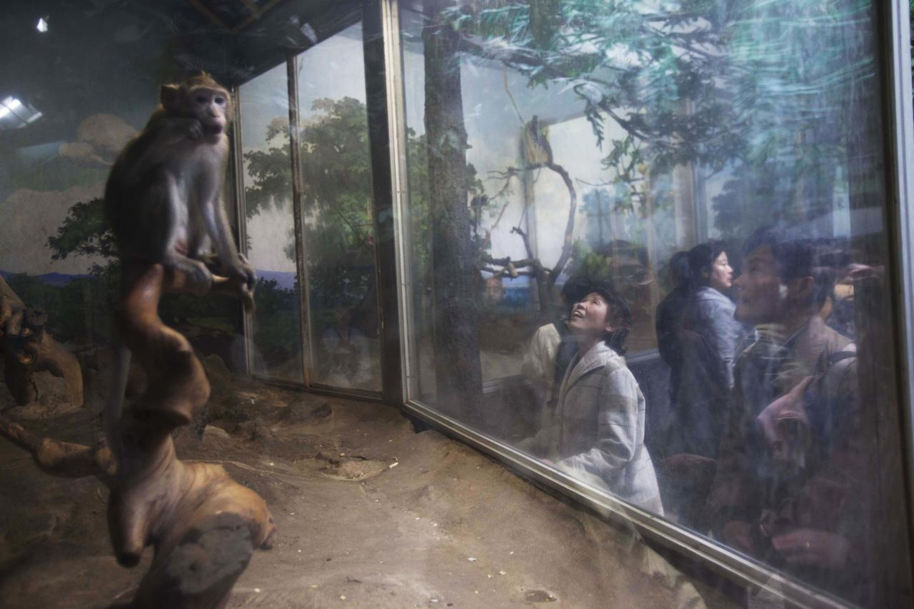 In this April 22, 2011 photo, a woman looks at monkeys behind a glass enclosure at the central zoo in Pyongyang, North Korea. (AP Photo/David Guttenfelder)