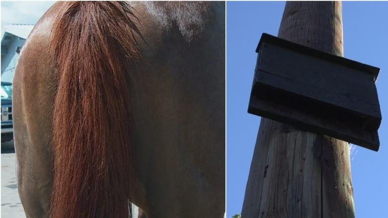 Horse poop, bat boxes: Calgary Stampede green initiatives impressive and stinky