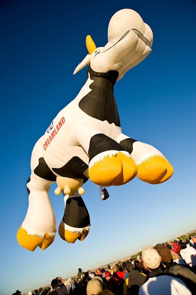 Airabelle the Cow hovers over the crowd during Day 7 of the 2008 Albuquerque International Balloon Fiesta October 10, 2008 in Albuquerque, New Mexico.  (Photo by Steve Snowden/Getty Images)