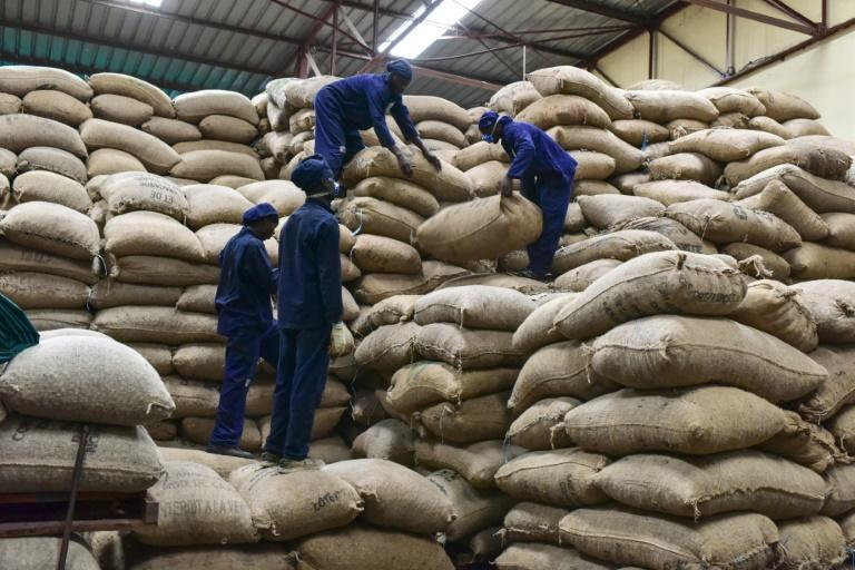 Most African-grown nuts are currently sent to Brazil, India or Vietnam for processing