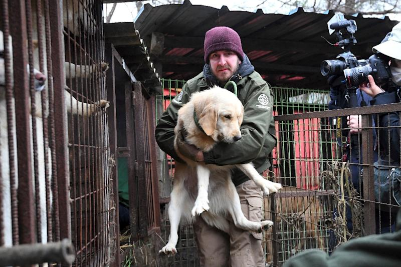 The push by animal rights activists, including many overseas groups, to outlaw dog meat consumption in the South has sparked accusations of Western hypocrisy (AFP Photo/JUNG Yeon-Je)