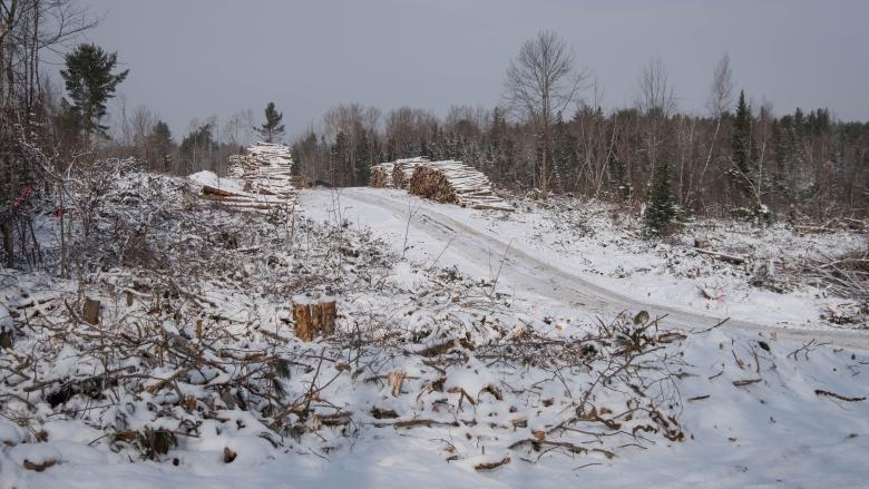 Opponents say Crown land licence would chop down forest health