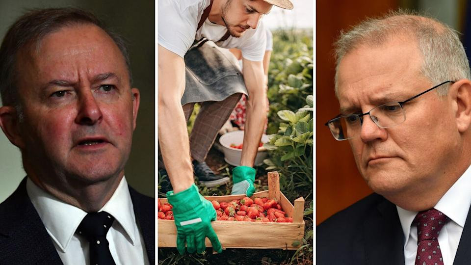 Anthony Albanese has said the Government needs to do more to address poor wages for farm workers. Images: Getty