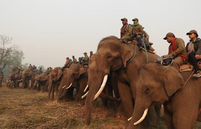 A team of rhino counters pictured riding elephants during the census