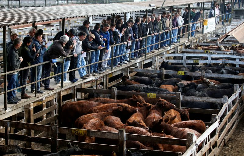 FILE PHOTO: Cattle traders look over cattle for sale inside corrals at the Liniers market, in Buenos Aires