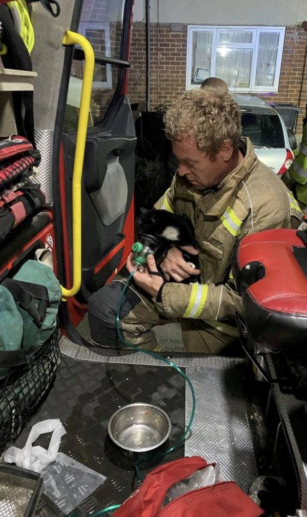 Pictures show the kitten with an oxygen mask of its face while sitting on the lap of a fireman. (SWNS)