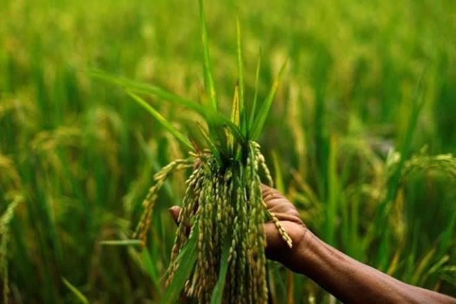 Seed tech firm, farmer, crop outcome , harvest,Crop Science Division,US, Europe,Indian Agricultural Research Institute