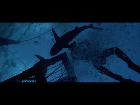 """<p>Peter Gimbel's 1971 documentary <em>Blue Water, White Death</em> documents his crew's hunt across the Indian Ocean to photograph a great white shark. With real, daring feats in shark-infested waters, and well-done filmmaking at its core, this is the film to watch if you're looking to avoid cheap special effects and sink your teeth into something authentic.</p><p><a class=""""link rapid-noclick-resp"""" href=""""https://go.redirectingat.com?id=74968X1596630&url=https%3A%2F%2Fitunes.apple.com%2Fus%2Fmovie%2Fblue-water-white-death%2Fid499421341%3Fat%3D1001l6hu%26ct%3Dgca_organic_movie-title_499421341&sref=https%3A%2F%2Fwww.esquire.com%2Fentertainment%2Fmovies%2Fg35862706%2Fbest-shark-movies%2F"""" rel=""""nofollow noopener"""" target=""""_blank"""" data-ylk=""""slk:Watch Now"""">Watch Now</a></p><p><a href=""""https://www.youtube.com/watch?v=ctLXFtFKbvA"""" rel=""""nofollow noopener"""" target=""""_blank"""" data-ylk=""""slk:See the original post on Youtube"""" class=""""link rapid-noclick-resp"""">See the original post on Youtube</a></p>"""