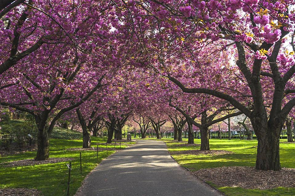 """<p>For many parts of the world, spring means cherry blossoms — and they really are something to behold. Find the closest <a href=""""https://www.nps.gov/subjects/cherryblossom/maps.htm"""" rel=""""nofollow noopener"""" target=""""_blank"""" data-ylk=""""slk:location for cherry blossoms"""" class=""""link rapid-noclick-resp"""">location for cherry blossoms</a> and schedule a trip to go marvel at their beauty.</p>"""