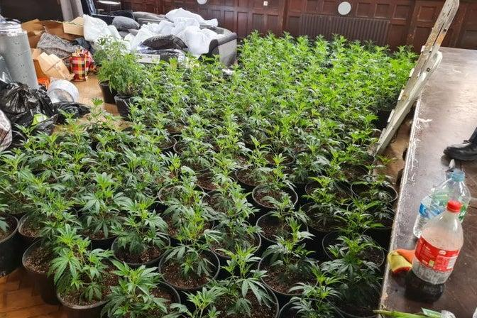 <p>The cannabis farm was discovered in Whitechapel</p> (Metropolitan Police)