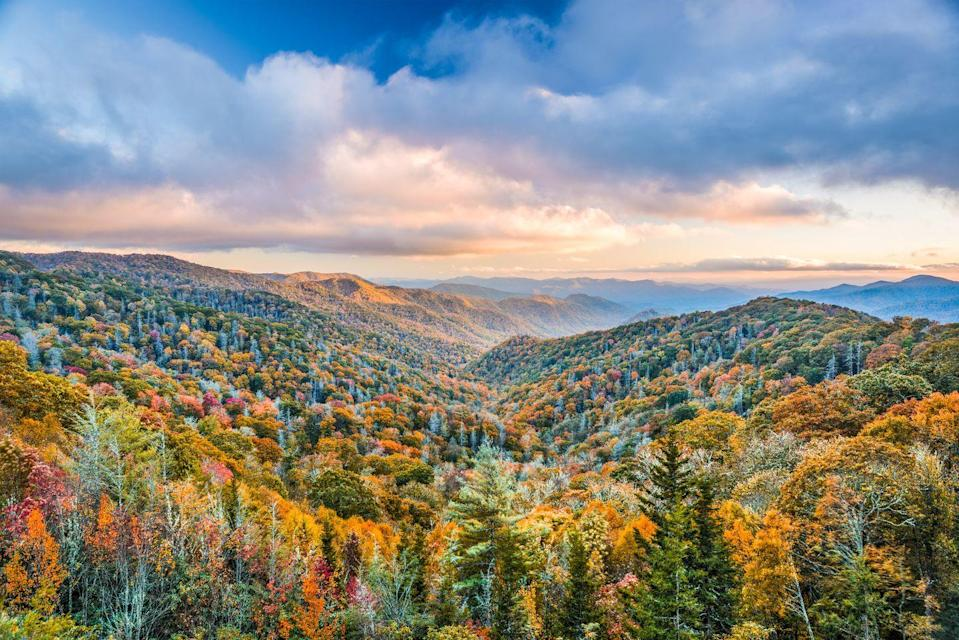 """<p><strong>Where to go: </strong>A vast variety of deciduous trees — including sugar maple, scarlet oak, sweetgum, red maple, and hickories —fill Smoky Mountains National Park. Take in the red, greens, yellows, and oranges by cruising along the Blue Ridge Parkway, an iconic American drive. </p><p><strong>When to go:</strong> <a href=""""https://www.nps.gov/grsm/planyourvisit/fallcolor.htm"""" rel=""""nofollow noopener"""" target=""""_blank"""" data-ylk=""""slk:Mid-October and Early November"""" class=""""link rapid-noclick-resp"""">Mid-October and Early November</a></p><p><a class=""""link rapid-noclick-resp"""" href=""""https://go.redirectingat.com?id=74968X1596630&url=https%3A%2F%2Fwww.tripadvisor.com%2FHotels-g143031-Great_Smoky_Mountains_National_Park_Tennessee-Hotels.html&sref=https%3A%2F%2Fwww.redbookmag.com%2Flife%2Fg34045856%2Ffall-colors%2F"""" rel=""""nofollow noopener"""" target=""""_blank"""" data-ylk=""""slk:FIND A HOTEL"""">FIND A HOTEL</a></p>"""