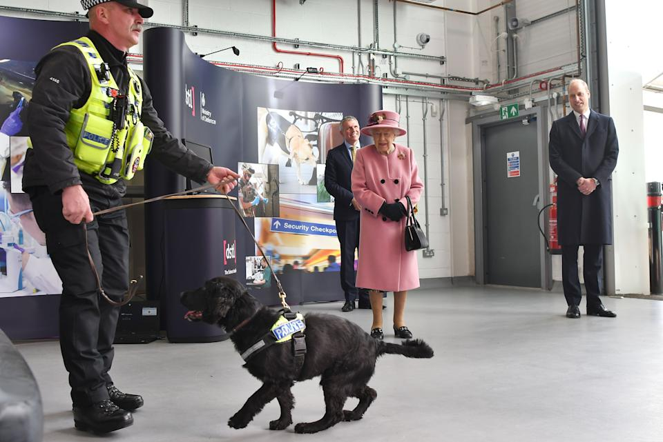 Britain's Queen Elizabeth II (C) and Britain's Prince William, Duke of Cambridge (R) view a demonstration of a Forensic Explosives Investigation with explosives detection dog named 'Max' at the Energetics Analysis Centre as they visit the Defence Science and Technology Laboratory (Dstl) at Porton Down science park near Salisbury, southern England, on October 15, 2020. - The Queen and the Duke of Cambridge visited the Defence Science and Technology Laboratory (Dstl) where they were to view displays of weaponry and tactics used in counter intelligence, a demonstration of a Forensic Explosives Investigation and meet staff who were involved in the Salisbury Novichok incident. Her Majesty and His Royal Highness also formally opened the new Energetics Analysis Centre. (Photo by Ben STANSALL / POOL / AFP) (Photo by BEN STANSALL/POOL/AFP via Getty Images)