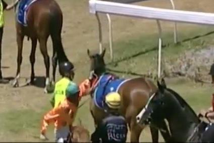 The apprentice jockey dismounted before striking his horse in the ribs