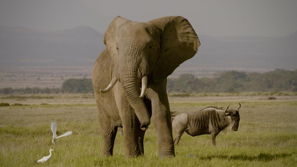 """<p>Dive into the world of Ivory trafficking in this documentary that exposes some of the world's top poachers and dealers in an effort to save the elephants.</p> <p>Watch <a href=""""http://www.netflix.com/title/80117533"""" class=""""link rapid-noclick-resp"""" rel=""""nofollow noopener"""" target=""""_blank"""" data-ylk=""""slk:The Ivory Game""""><strong>The Ivory Game</strong></a> on Netflix now.</p>"""