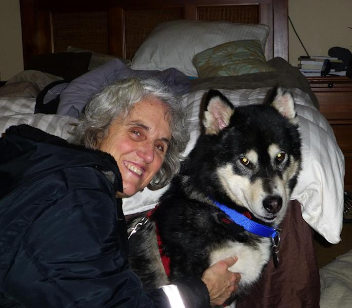 This February 2, 2013 publicity photo provided by the Alaskan Malamute Assistance League shows owner Nicole McCullough and Cinder, a 6-year-old female malamute, at home in Anchorage, Alaska. Cinder was one of 213 Alaskan malamutes seized from a Montana breeder who was convicted in December 2012 of 91 counts of animal cruelty. The dogs were released to the Lewis & Clark Humane Society in Helena, Mont., where they were spayed and neutered; and then the Assistance League helped place the animals. (AP Photo/Alaskan Malamute Assistance League, Bob Sutherland)