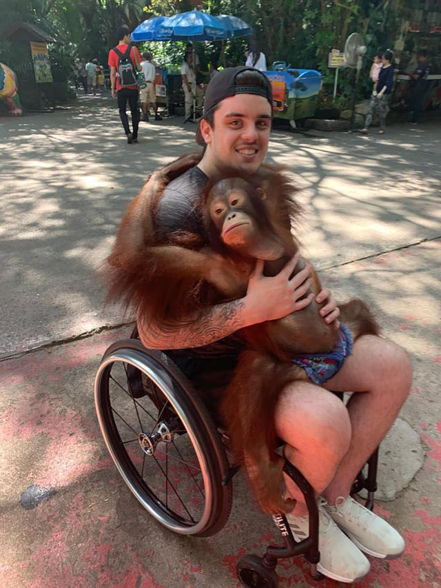 This photo provided by Tom Straschnitzki shows Ryan Straschnitzki as he plays with an orangutan during a visit to the Safari World zoo in Bangkok, Thailand, Sunday, Dec. 1, 2019. Ryan was left paralyzed from the chest down after the bus carrying his Humboldt Broncos hockey team collided with a truck at a rural intersection in Canada 17 months ago. The former hockey prospect went to Thailand to have a stimulator implanted in his back so electrical currents can communicate with his nerves. He took his first small steps and hopes for a better life. (Tom Straschnitzki/ via AP)