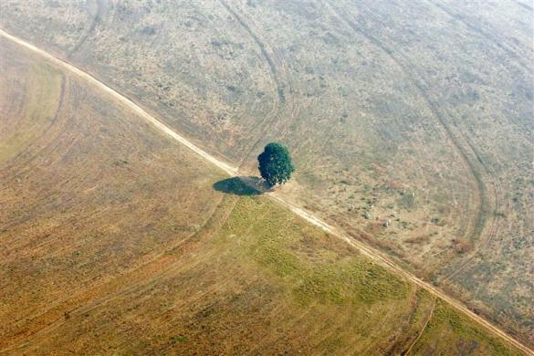 An aerial view shows a single tree seen on land that was previously jungle in Mato Grosso state, one of the Brazilian states suffering from deforestation, August 9, 2005.