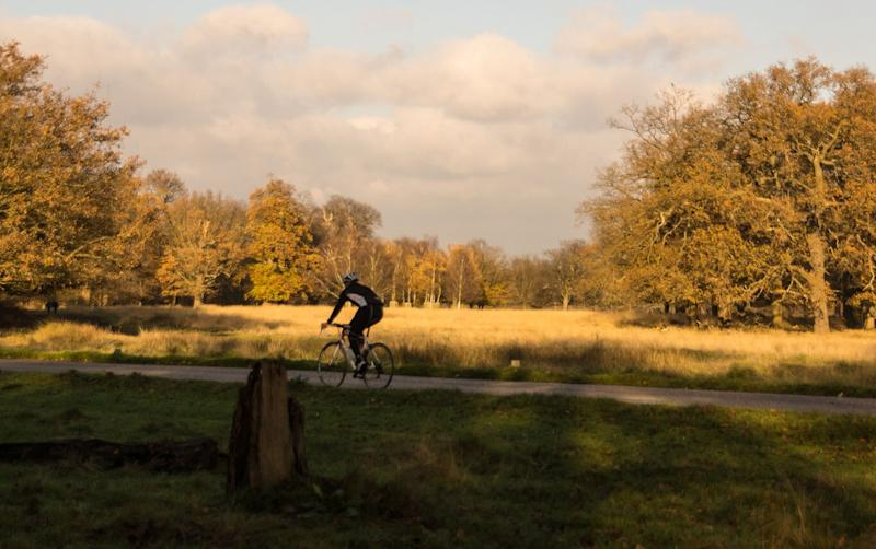 Cycle your way through Richmond Park - getty