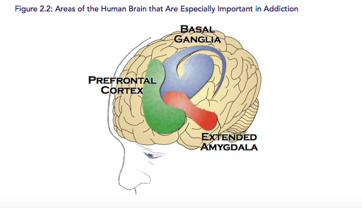 """<span class=""""caption"""">Regions of the brain are affected differently by alcohol.</span> <span class=""""attribution""""><span class=""""source"""">Surgeon General's Report on Addiction</span></span>"""
