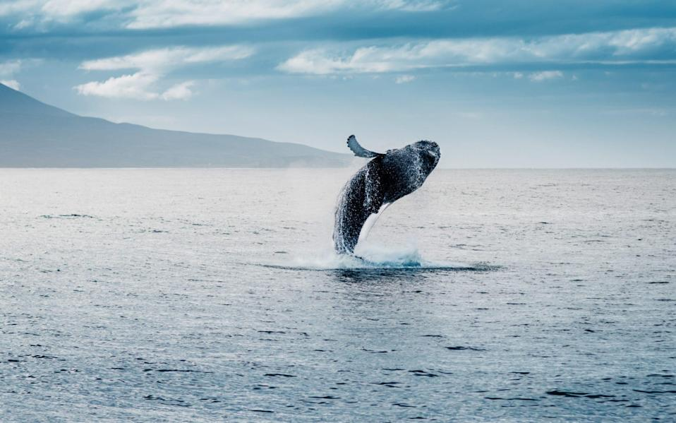 Having a whale of a time - Getty