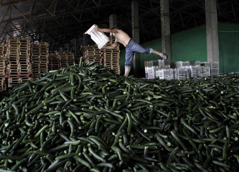 A man balances on a pile of cucumbers collected for destruction at a greenhouse compound outside Bucharest, Romania, Monday, June 6, 2011. Producers destroyed thousands of tons of cucumbers over the past two days, according to local media, after their production was either turned back from exports or refused for sale by supermarkets in Romania for fear of E. coli bacteria contamination. The current crisis is the deadliest known E. coli outbreak, killing at least 22 people and sickening more than 2,300 across Europe. (AP Photo/Vadim Ghirda)
