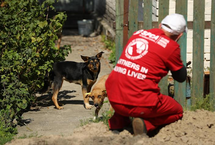 """<p>Pavel """"Pasho"""" Burkatsky, a professional dog catcher from Kiev, takes aim with a blow gun to shoot a tranquilizer dart at a stray dog in the exclusion zone around the Chernobyl nuclear power plant on Aug. 17, 2017, in Chernobyl, Ukraine. (Photo: Sean Gallup/Getty Images) </p>"""