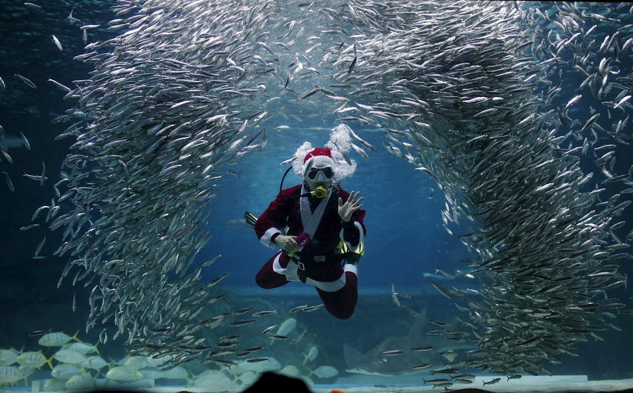 "A diver dressed in a Santa Claus costume swims with sardines during a promotional event for Christmas ""Sardines Feeding Show with Santa Claus"" at the Coex Aquarium in Seoul, South Korea, December 9, 2015.  REUTERS/Kim Hong-Ji      TPX IMAGES OF THE DAY"