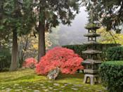 """<p><strong>Start from the top here.</strong><br> Dotted with vivid Japanese maples in fall, delicate pearl-pink weeping cherry trees in spring, fairytale-worthy bridges, shimmering pools teeming with koi, and traditional structures like the Kashintei Tea House (constructed in Japan in 1968, then shipped to <a href=""""https://www.cntraveler.com/destinations/portland-oregon?mbid=synd_yahoo_rss"""" rel=""""nofollow noopener"""" target=""""_blank"""" data-ylk=""""slk:Portland"""" class=""""link rapid-noclick-resp"""">Portland</a>) the garden feels like another, far more serene, dimension. But don't just take it from us. Even Nobuo Matsunaga, former Japanese Ambassador, declared it """"the most beautiful and authentic Japanese garden in the world outside of Japan."""" Your main objective here is to spend at least an hour, preferably two, strolling the gently curved pathways, browsing the special exhibitions in the Cultural Village and Pavilion, reflecting in the Zen garden, sipping delicate Japanese green teas in the new glass-and-cedar Umami Café, inspired by <a href=""""https://www.cntraveler.com/story/kyoto-beyond-the-temples-and-shrines?mbid=synd_yahoo_rss"""" rel=""""nofollow noopener"""" target=""""_blank"""" data-ylk=""""slk:Kyoto's"""" class=""""link rapid-noclick-resp"""">Kyoto's</a> Kiyomizu-dera temple, and just generally blissing out.</p> <p><strong>Any particular sights we've got to be sure to see?</strong><br> Don't miss the Ellie M. Hill Bonsai Terrace, hidden behind the Jordan Schnitzer Japanese Arts Learning Center in the center of the Cultural Village. Here, garden staff collaborates with different Portland bonsai practitioners on a rotating display of bonsai species and styles. If you're visiting in late September, try to score tickets for the otherworldly O-Tsukimi, or Moonviewing Festival, an evening event that includes a slow stroll around the lantern-lit garden, traditional Japanese live music, a rare tea ceremony demonstration in the Kashintei Tea House, Japanese cuisine, and a cup of sake or tea to enjoy as yo"""