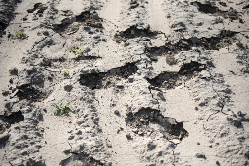 Footprints that have broken dry dirt in a field near McAllen, Texas