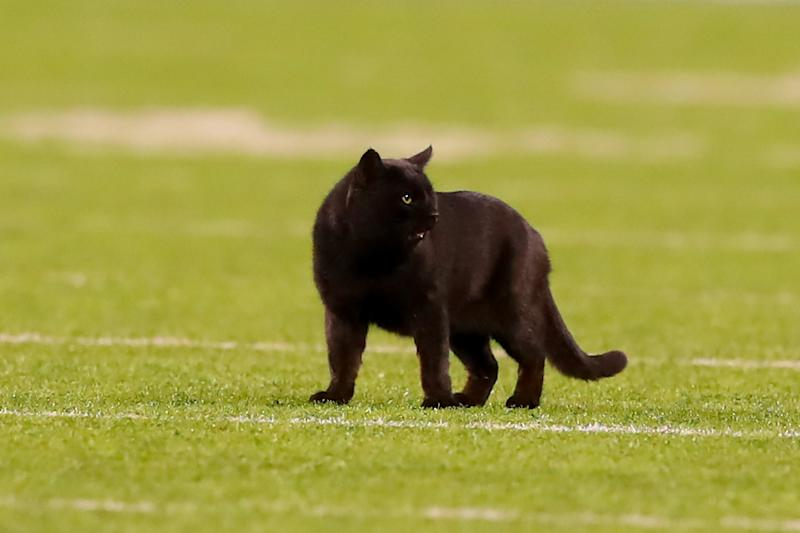 EAST RUTHERFORD, NJ - NOVEMBER 04: A Black Cat runs onto the field during the National Football League game between the New York Giants and the Dallas Cowboys on November 4, 2019 at MetLife Stadium in East Rutherford, NJ. (Photo by Rich Graes fourthsle/Icon Sportswire via Getty Images)