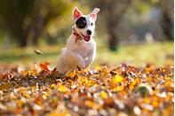 """<p>After the heat waves and before the snow is the best time to be outside. The feeling of <a href=""""https://www.countryliving.com/life/g2633/fall-bucket-list/"""" rel=""""nofollow noopener"""" target=""""_blank"""" data-ylk=""""slk:leaves crunching under your feet"""" class=""""link rapid-noclick-resp"""">leaves crunching under your feet</a> has an instant relaxing affect. </p>"""