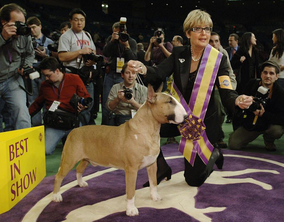 <p>This bull terrier named Rufus looks like a fierce competitor, particularly because of that strong build.</p>