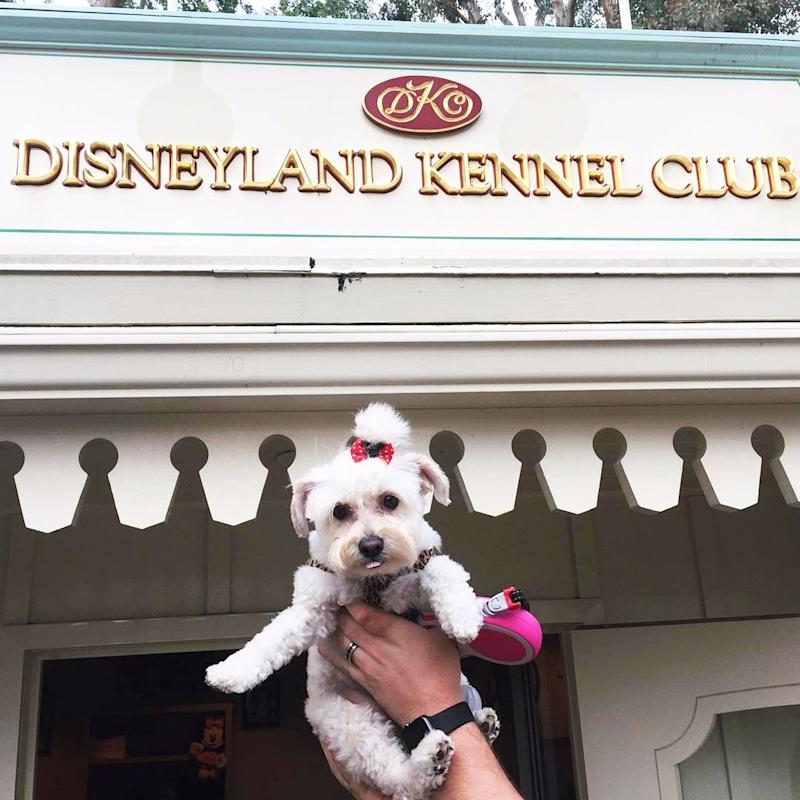 This 1 Disneyland Perk Allows You to Bring Your Pet to the Park With You