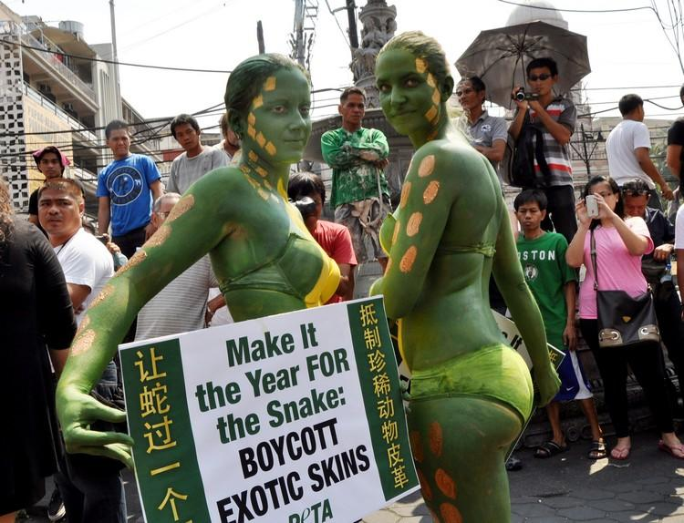 As Chinatown in Manila welcomes the Year of the Snake Feb. 8, PETA activists paint their bodies to look like snake skin to protest the use of exploitation of the reptile for exotic fashion products. (Paulo Vecina, NPPA Images)
