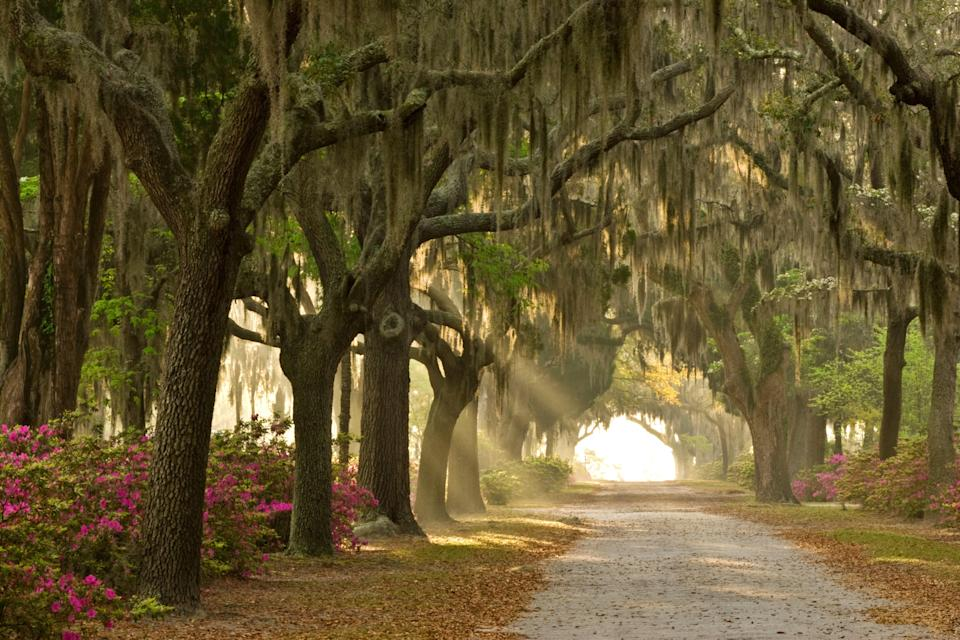 "<p><strong>Best thing to do in Georgia:</strong> Get spooked in Savannah</p> <p><a href=""https://www.cntraveler.com/stories/2016-08-16/the-perfect-weekend-in-savannah?mbid=synd_yahoo_rss"" rel=""nofollow noopener"" target=""_blank"" data-ylk=""slk:Savannah"" class=""link rapid-noclick-resp"">Savannah</a> is one of the most beautiful cities in the South, with Spanish moss and porched houses around every turn. Yet there's no denying <a href=""https://www.cntraveler.com/gallery/most-haunted-places-in-the-world?mbid=synd_yahoo_rss"" rel=""nofollow noopener"" target=""_blank"" data-ylk=""slk:the town's eeriness"" class=""link rapid-noclick-resp"">the town's eeriness</a>—even daytime tours point out the deaths that allegedly occurred at mansions as you pass by. Take one of the many available ghost tours at night to see some of the creepier spots, like Colonial Park Cemetery, Bonaventure Cemetery (a setting for the book and film <em>Midnight in the Garden of Good and Evil</em>), and the Mercer Williams house. Bonus: Your inevitable goosebumps will be a welcome respite from Georgia's heat and humidity.</p>"