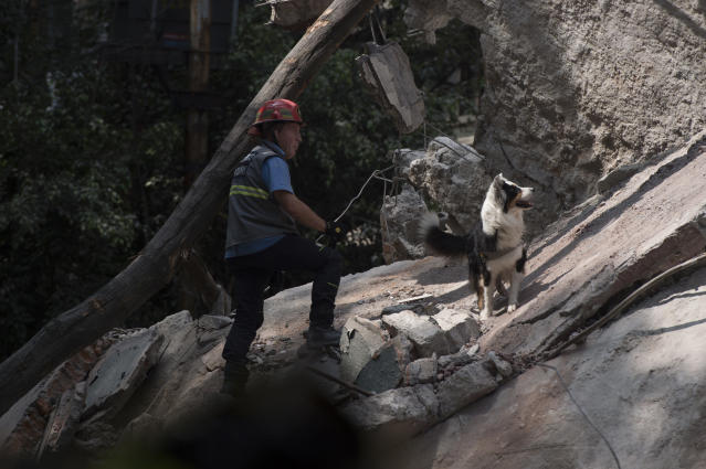 <p>A rescuer searches for survivors with a dog a day after the magnitude 7.1 earthquake jolted central Mexico killing more than 200 hundred people, damaging buildings, knocking out power and causing alarm throughout the capital on September 20, 2017 in Mexico City, Mexico. The earthquake comes 32 years after a magnitude-8.0 earthquake hit on September 19, 1985.(Photo: Humberto Romero/Getty Images) </p>