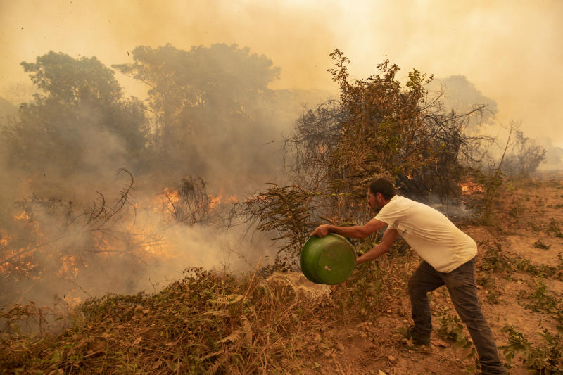 A volunteer tries to douse a fire on the Transpantaneira road in the Pantanal wetlands near Pocone, Mato Grosso state, Brazil, Friday, Sept. 11, 2020. The number of fires in Brazil's Pantanal, the world's biggest tropical wetlands, has more than doubled in the first half of 2020 compared to the same period last year, according to data released by a state institute. (AP Photo/Andre Penner)